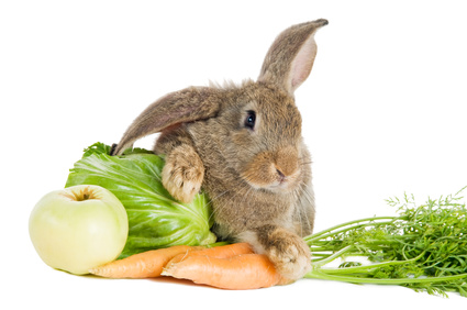 brown rabbit with vegetables isolated