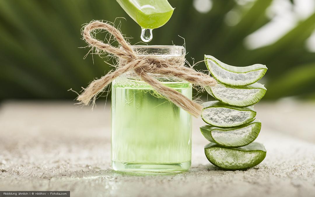 Green Star Elite Rezept: frischer grüner Saft mit Vogelmiere und Aloe Vera