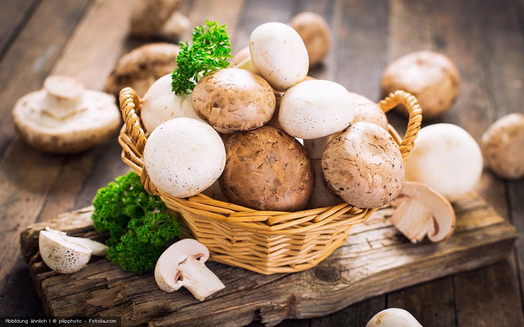 Der Champignon – ein Allrounder der Rohkost-Küche