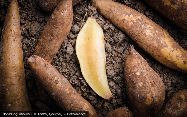 Yacon – natürliche Süße aus der Inka-Knolle