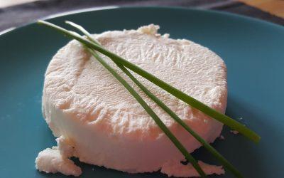 Vegane Camembert Käse Alternative von Christian Wenzel